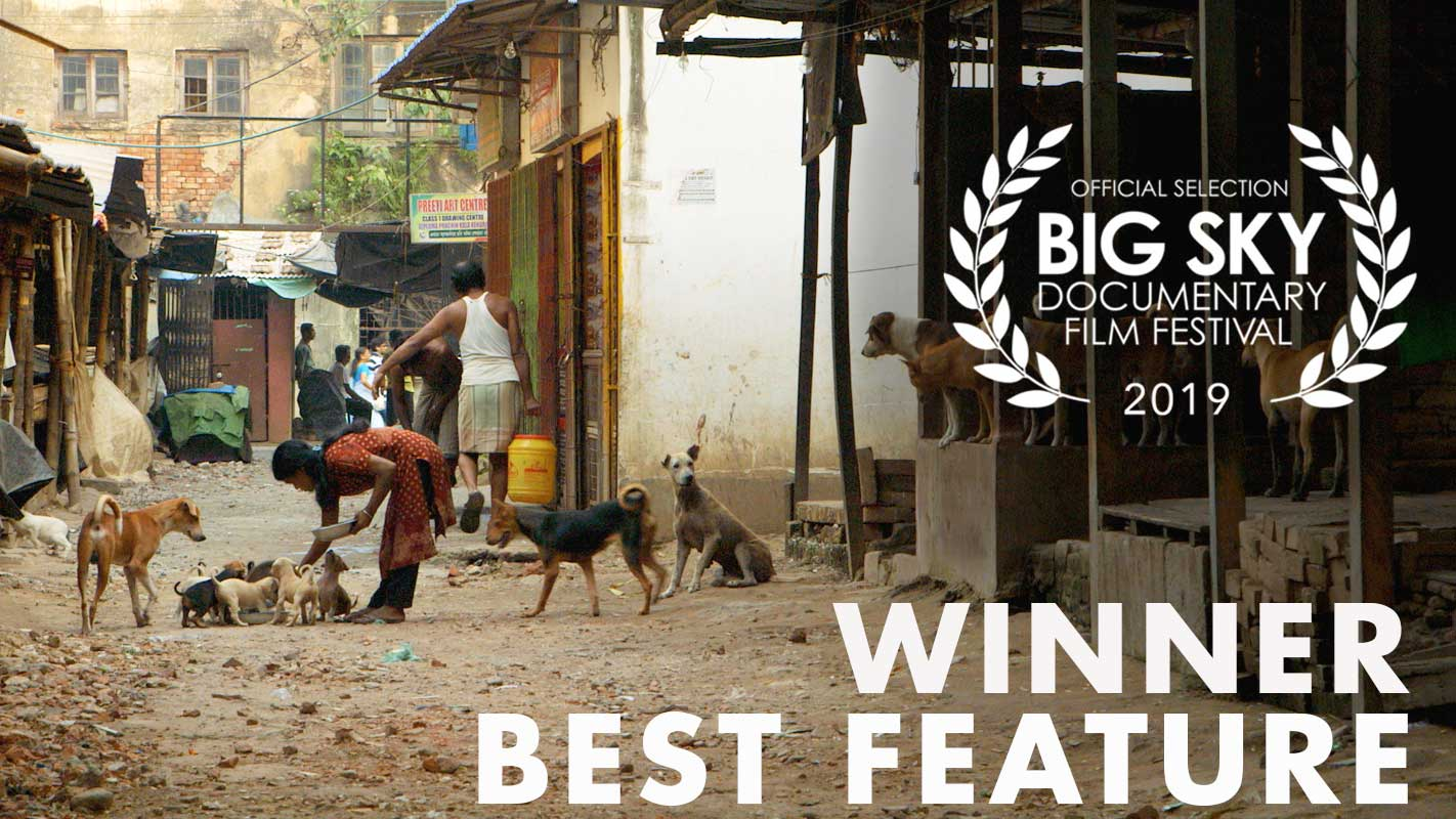 Pariah Dog Wins Big Sky Film Festival
